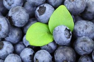 7-propiedades-saludables-de-los-arandanos