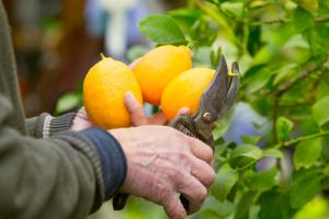 el-consumo-de-productos-de-proximidad-mejoraria-nuestra-alimentacion