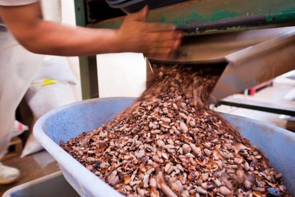 descubre-los-secretos-de-tomar-autentico-chocolate-organico