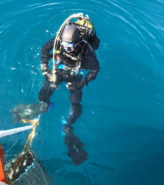 coral-marine-sea-drink-el-tesoro-mas-buscado-bajo-el-mar