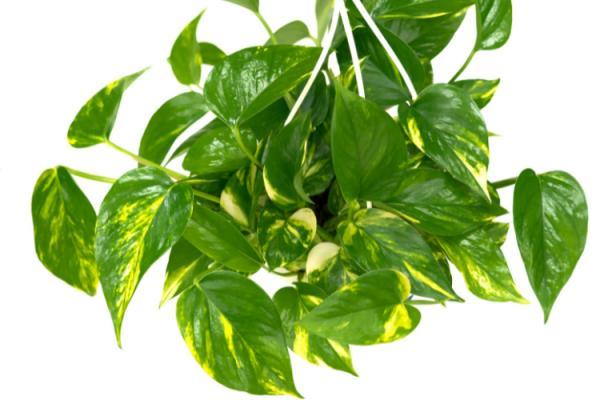 8-plantas-toxicas-que-no-debes-tener-cerca-de-tus-mascotas