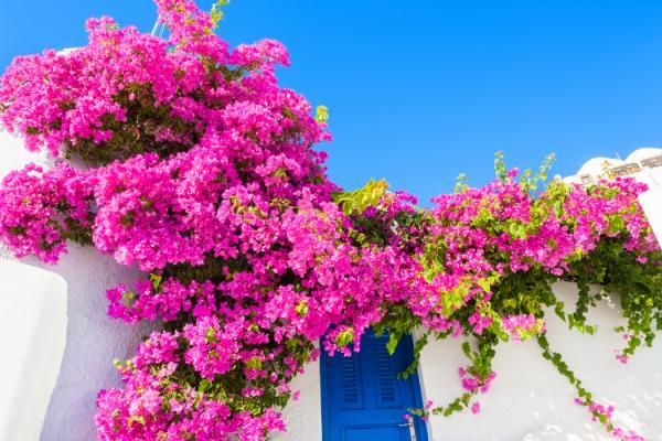 las-flores-ideales-para-regalar-en-verano
