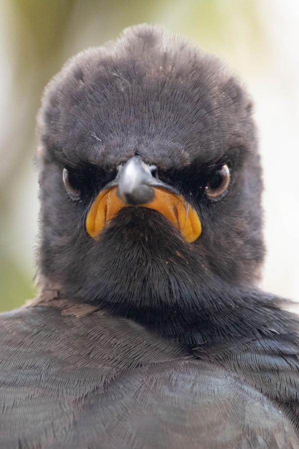 el-concurso-the-comedy-wildlife-photo-awards-ya-tiene-finalistas