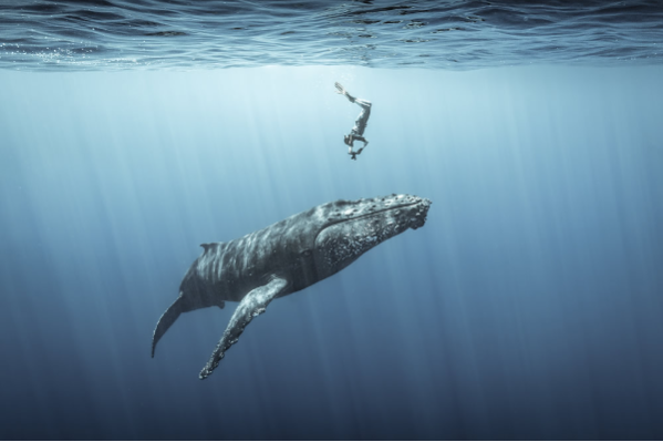 las-impresionantes-fotografias-del-concurso-ocean-photography-award