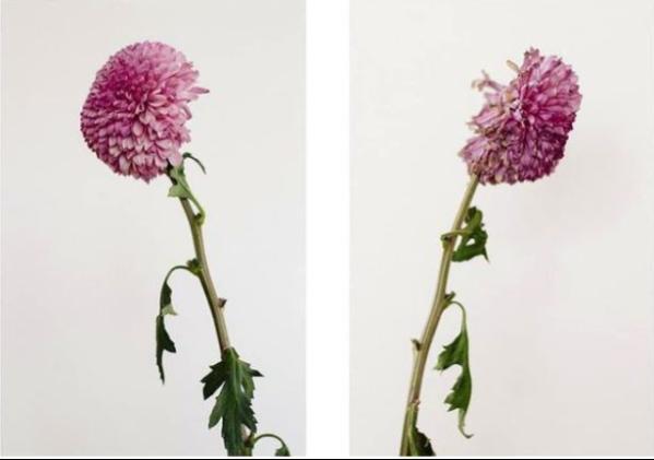 cuerpos-flores-y-naturaleza-se-entremezclan-en-las-elegantes-fotograf